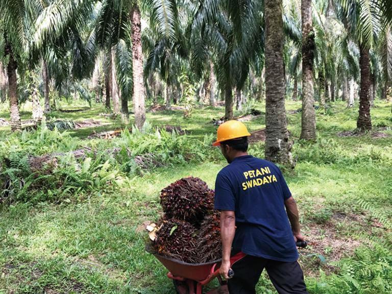 花王、5000件の農園を支援