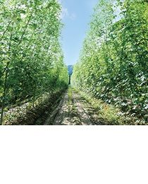 ドイツの栽培技術を導入して生産効率を高めたホップ畑