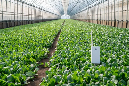Daiwa Food & Agriculture Co. Ltd. is expanding to cover the entire food production process from farming to retail