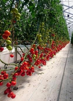 Entering agribusiness via Daiwa Food & Agriculture Co., Ltd. (Kawanishi Town, Yamagata Pref.)