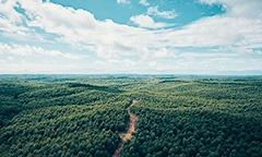 """インドネシアでは1990年代から、大規模な植林事業を手掛けている<br><span class=""""fontSizeS"""">(写真提供:丸紅)</span>"""