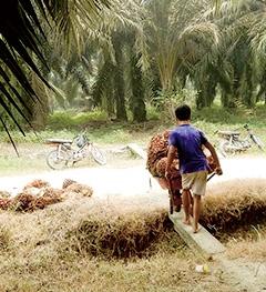 インドフードが運営するパーム農園で働く少年。児童労働や未払いなどの人権侵害が発覚した。危険な農薬への防護が不十分な労働者も見られた<br>写真提供:レインフォレスト・アクション・ネットワーク
