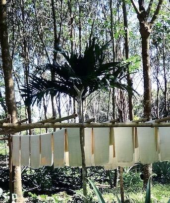 天日干しされた天然ゴムのシート(写真提供:WWFジャパン)