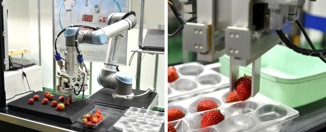 図2 「触覚」を備えたロボットで柔らかい果物も扱える