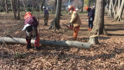 「山仕事体験会」では、ボランティアがせん定や樹木の伐採を行う(写真:高井 譲)