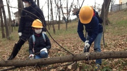 子供たちにとっては、のこぎりを使って樹木を切る貴重な機会となる(写真:高井 譲)
