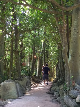 備瀬の集落。家々を囲む防風林が連なることで緑の小道がどこまでも続く(写真:甲斐 徹郎)