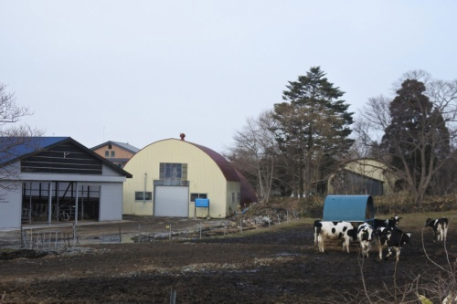 図13●八雲町内の牧場。将来的にはバイオガス発電の電気を畜産施設に活用も