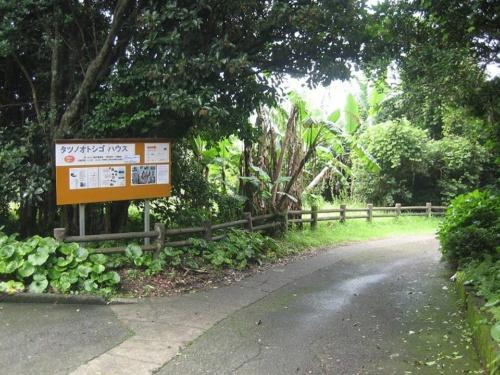 整備前の番所鼻自然公園。2010年当時の公園には樹木が生い茂り、入り口から海が見えないような状態(写真:頴娃おこそ会)