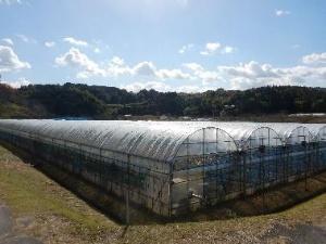 富田林市農業公園(サバーファーム)内のぶどう園(写真:富田林市)