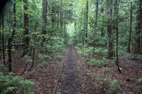 森林鉄道の線路に沿い1.8キロの道のりを歩く。青森ヒバは、弘前城や岩手県の中尊寺金色堂といった堅牢を要する建物に使われた。一帯は東北森林管理局の「大畑ヒバ施業実験林」となっており、ヒバの特性ほか詳しい解説板が設置されているのも興味深い。ガイドを務めるのは、結婚を機に移住した山口和歌子氏