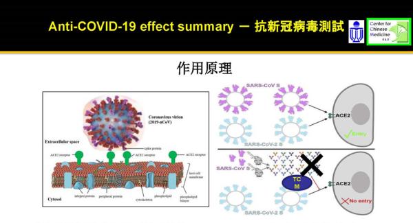 漢方薬由来の成分が、コロナウィルスの細胞内への侵入を防ぐ作用原理を解説した資料。 左上紫の突起がスパイクタンパク質だ。資料提供:カール・ツィム教授