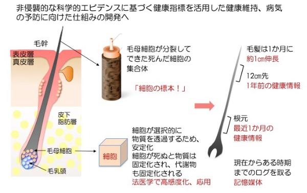 図4●毛髪の生物学的意義と位置情報による健康情報の蓄積