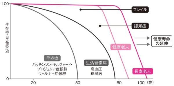 図2●年齢と老化の関係モデル