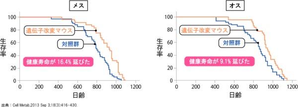 図2●遺伝子改変マウスの生存率の推移