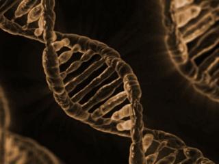 ゲノム編集技術応用食品