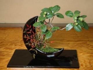 赤字のメッキ会社を黒字転換、盆栽の新スタイルを確立