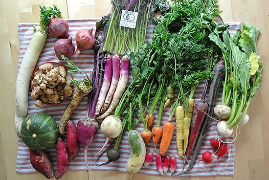 色とりどり、個性豊かな季節の野菜がそろいました!