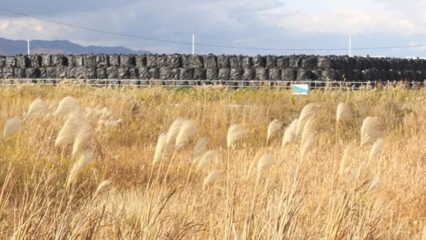 楢葉町では除染が進められている。農地の奥には、取り除いた土壌などが入った袋が積みあがっている