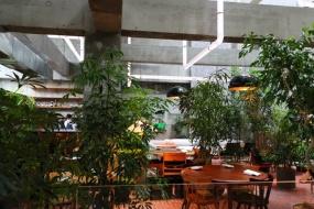 ラウンジは緑にあふれ、コンクリートの無機質な肌合いを中和してくれている(写真:青木 桂子)