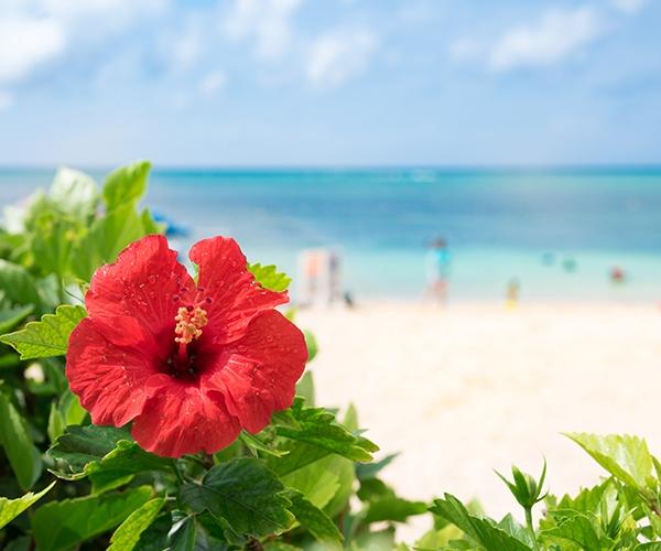 南の離島・沖永良部島に灯る 持続的で心豊かな暮らしに向けたイノベーション