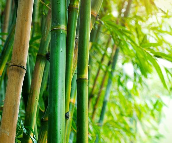 よみがえれ日本の竹 ベンチャー企業が描く竹産業の未来