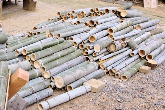 竹炭を作るために切り出された竹(写真撮影:筆者)
