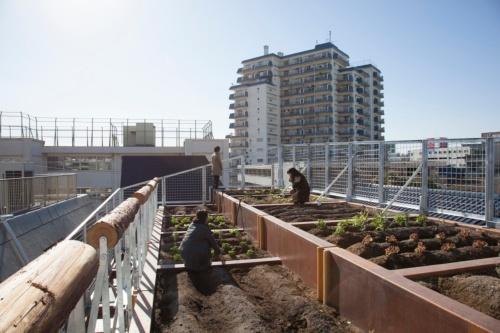 「菜園長屋」の屋上菜園(写真:吉村靖孝建築設計事務所、撮影:吉村靖孝)