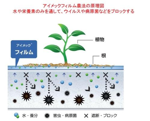アイメック農法の原理。植物は高分子フィルムの上に根を張る。フィルムは水や栄養だけを通し、害虫や病原菌は遮断する(資料提供:メビオール)