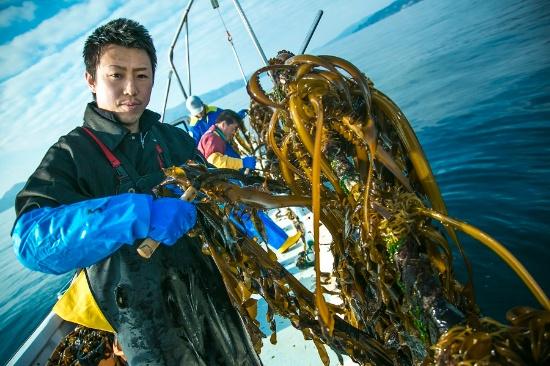 コンブを引き揚げるフィッシャーマンジャパンの漁師、阿部勝太さん。フィッシャーマンジャパンだけでも年間数十トンものコンブが廃棄されているという(写真提供:dot science)