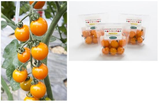 Tファームいしいで栽培されているファイトリッチシリーズの「オレンジ千果」(左)。収穫されたトマトは「ひなとま」というブランドで関西圏のスーパーで販売されている(右、写真提供:タキイ種苗)