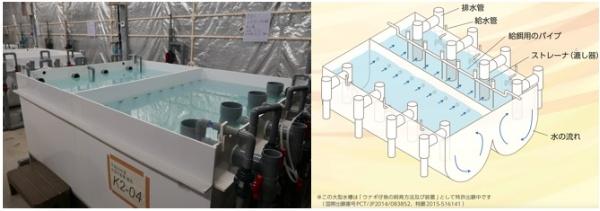 左:水産研究・開発機構 増養殖研究所 南伊豆庁舎の1000リットル大型水槽(写真:高山和良)と、その構造図(図提供:国立研究開発法人 水産研究・教育機構)。二槽に分かれ、水流によってウナギの仔魚が二つの連結した水槽間を移動する。仔魚が移動していなくなった方を掃除する。水槽の材質は塩化ビニールなど安価で耐久性の高い素材を使用した