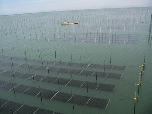 福岡県・有明海の漁場。有明海は大規模なノリ漁場で、高密度で養殖。潮の満ち引きにより水面の上に出ることで定期的に日光に当たり、健康に育つ(写真提供:水産研究・教育機構)