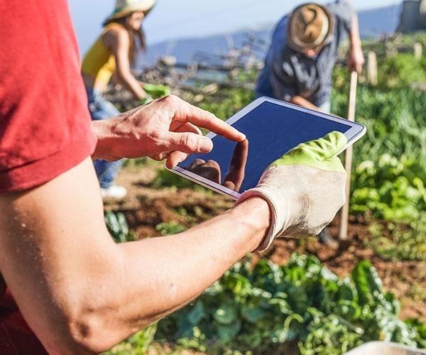 体にも地球にも優しい米づくり、野菜づくり スマート農業で実現