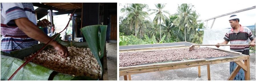 発酵を管理するために発酵中のカカオ豆の温度を測っている(左)。乾燥台を使ってカカオ豆の乾燥を行ってもらうように改善した(右)(写真提供:フーズカカオ)