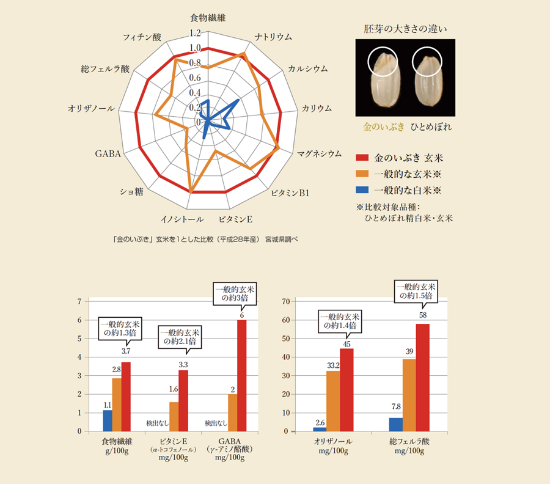 写真は「金のいぶき」の胚芽の大きさを通常のコメと比べたもの。3つのグラフは巨大胚芽によって栄養価が高いことを示している。白米との比較はもちろんだが、胚芽が大きいことで他の玄米と比べても様々な栄養成分が多く含まれていることがわかる(資料提供:宮城県 農政部 みやぎ米推進課)