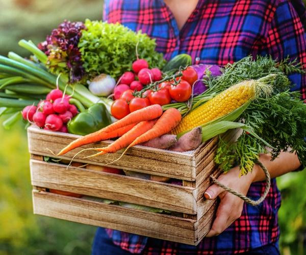 SDGs時代のテーマパークは「農」と「食」が主役(後編) クルックフィールズとワタミの新たな試み