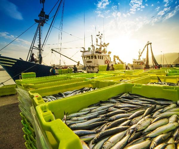 崖っぷちのニッポン水産業、再生への道筋 70年ぶりの漁業法改正でどう変わる?