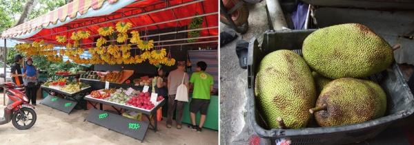 道路脇などに立つ果物屋台には、地元産・輸入品を含めて一年中豊富な果物が並ぶ(左)。熱帯果物のチェンペダ(右)。店頭に豊富な果物が並ぶ裏で、売れ残って傷んでしまったものが廃棄される現実がある(写真提供:森 純)