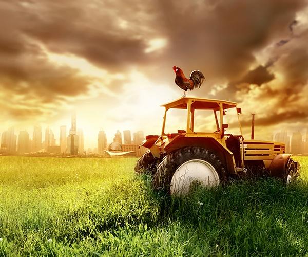 イギリスの地下に広がる農園は防空壕の再利用 都市型農業は食問題の解決策となるか
