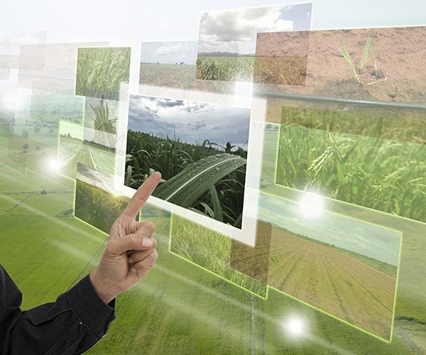 """農業がAIで進化する """"コンピュータの目""""が自動収穫の可能性を拡大"""