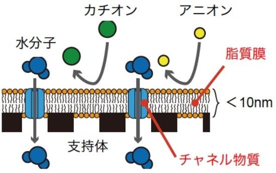 (図4)生体模倣膜
