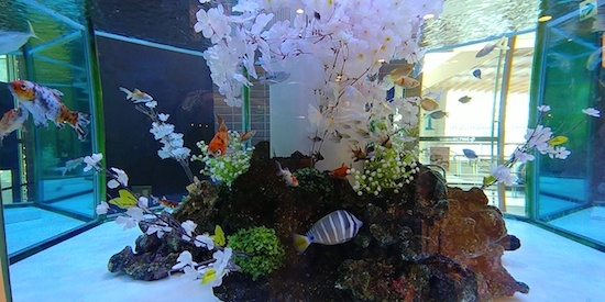 (写真2)好適環境水で満たされた水槽で泳ぐ魚たち