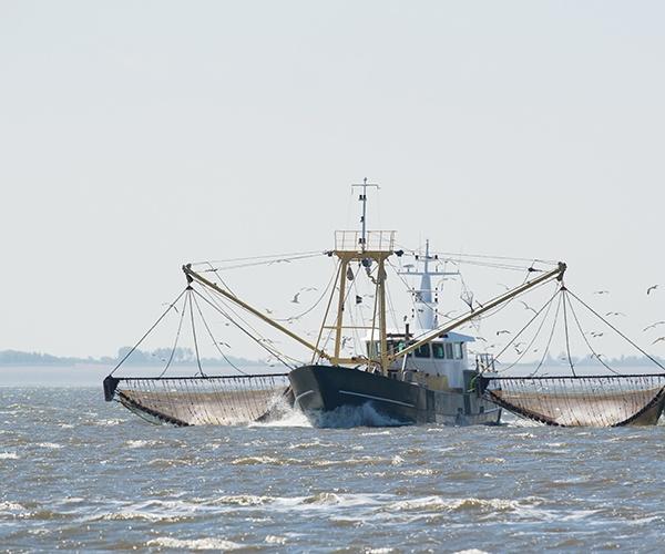 未来も漁師がいる日本を――水産スタートアップの挑戦