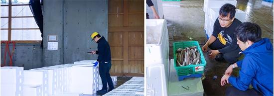 魚市場での業務の様子。ウーオの水産物バイヤーが競りにかけられる前の魚の写真を撮影。相場価格と共に、UUUOのサービス上に公開する(写真提供:ウーオ)