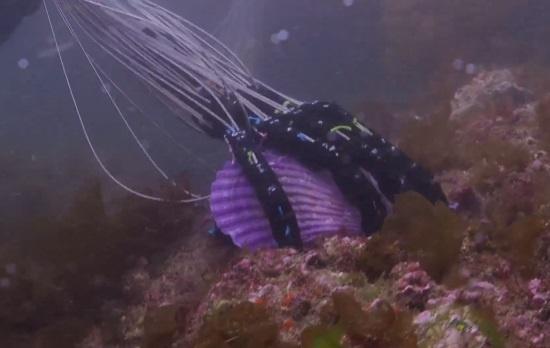 (写真2)遠隔で漁業や海中での作業を行う実験