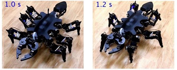 (写真1)六脚ロボットの静止イメージ。左はアリが静止している姿勢を模倣しており、右はゴキブリが静止している姿勢を模倣している(東京工業大学のニュースリリースより引用)