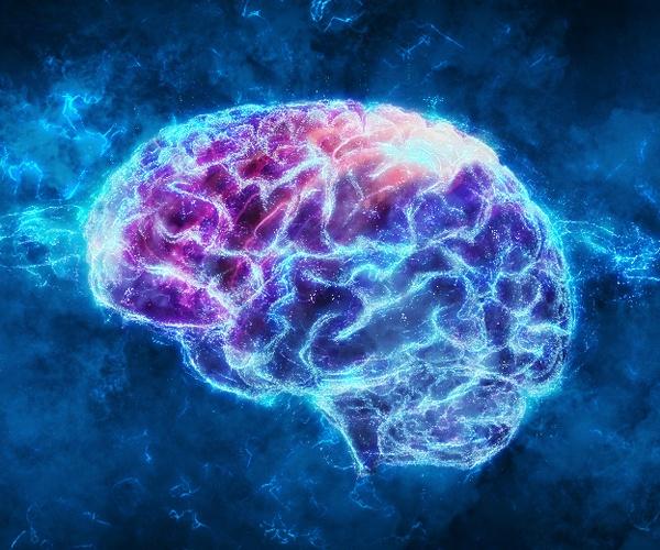 """""""戦う脳""""に進化へのヒント、 機能の解明で覆される常識"""