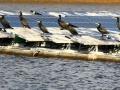「水鳥のフン」「釣り人」、兵庫のため池に見る水上太陽光の運用上の課題