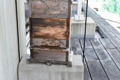図6●ニホンミツバチの巣箱